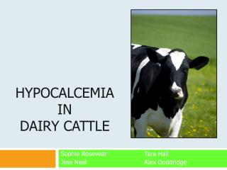 Hypocalcemia in dairy cattle