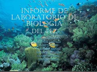 Informe de laboratorio de biología Del pez