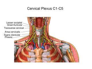 Cervical Plexus C1-C5