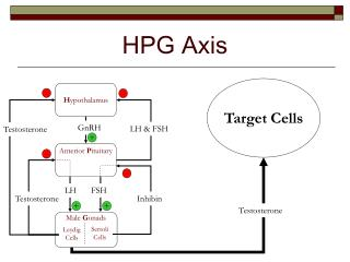 HPG Axis