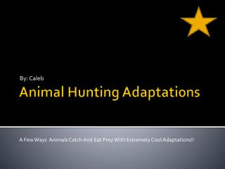 Animal Hunting Adaptations