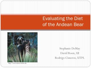 Evaluating the Diet of the Andean Bear
