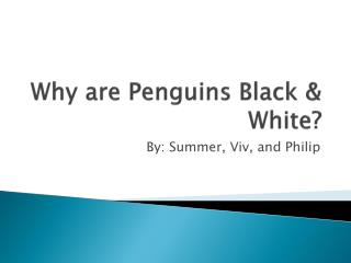 Why are Penguins Black & White?