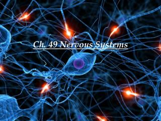 Ch. 49 Nervous Systems