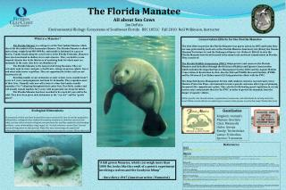 The Florida Manatee All about Sea Cows Jim DePalo