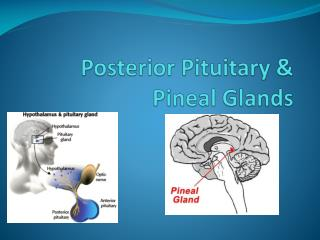 Posterior Pituitary & Pineal Glands