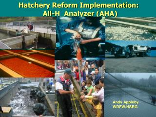 Hatchery Reform Implementation:             All-H  Analyzer (AHA)