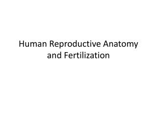 Human Reproductive Anatomy and Fertilization