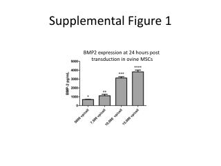 Supplemental Figure 1