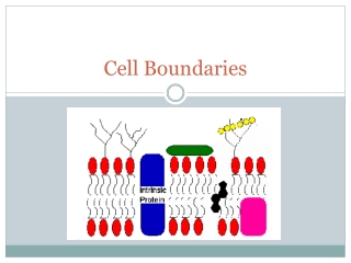Cell Boundaries