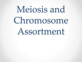 Meiosis and Chromosome Assortment