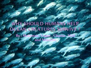 Why Should Humans Help Ocean creatures Survive ?