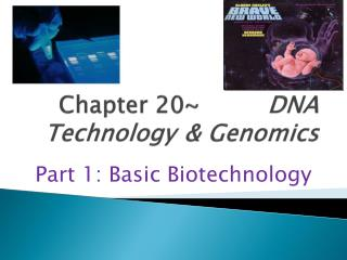 Chapter 20  DNA Technology   Genomics