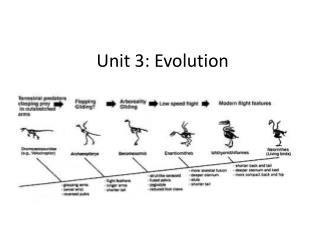 Unit 3: Evolution