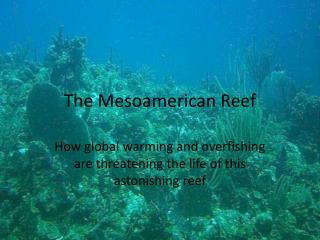 The Mesoamerican Reef