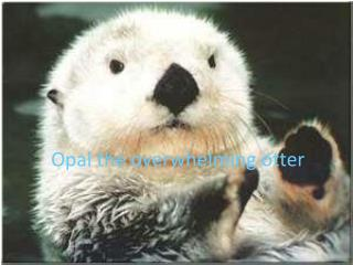 Opal  the overwhelming otter