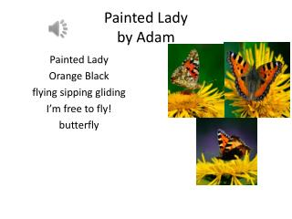 Painted Lady  by Adam