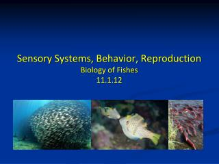 Sensory Systems, Behavior, Reproduction Biology of Fishes 11.1.12
