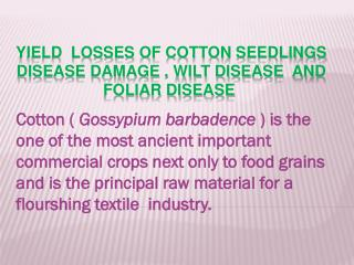 Yield  losses  of cotton  seedlings  disease damage , wilt disease  and foliar disease
