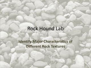 Rock Hound Lab