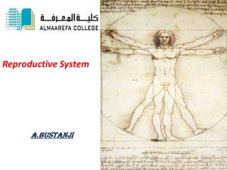 Reproductive System a.bustanji