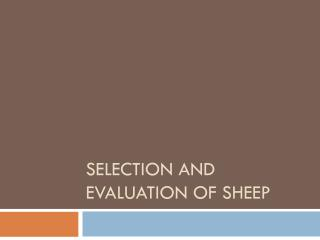 Selection and Evaluation of  Sheep