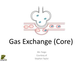Gas Exchange (Core)