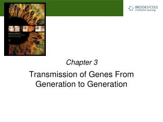 Transmission of Genes From Generation to Generation