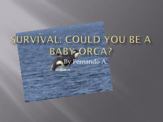 Survival: Could  YoU  BE A  Baby Orca?