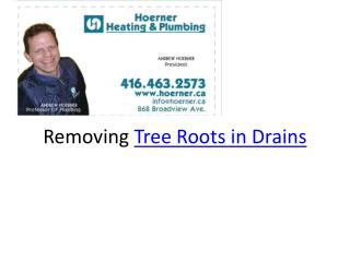 Tree Roots in Drains