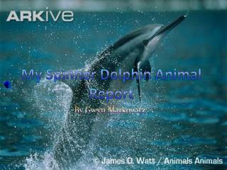 My Spinner Dolphin Animal Report