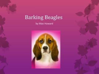 Barking Beagles
