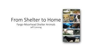 From Shelter to  Home Fargo-Moorhead Shelter Animals Jeff  Canning