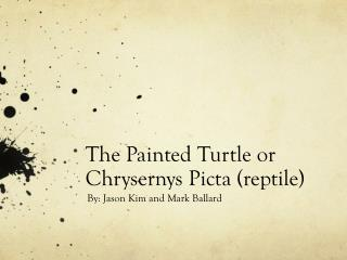 The Painted Turtle or  Chrysernys Picta  (reptile)