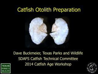 Catfish Otolith Preparation