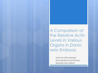 A Comparison of  the Relative  Actin Levels in Various Organs in  Danio rerio Embryos
