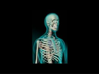 MEDICAL TERMINOLOGY RELATED TO SKELETAL SYSTEM