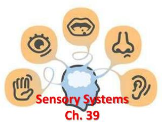 Sensory Systems Ch. 39