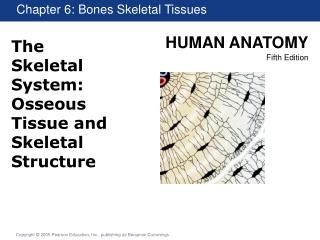 The Skeletal System: Osseous Tissue and Skeletal Structure