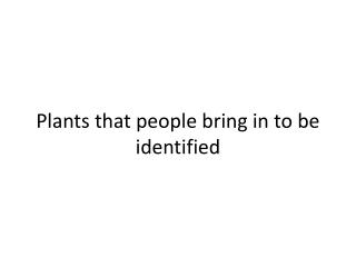 Plants that people bring in to be identified