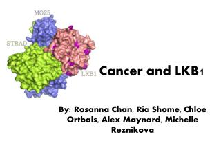 Cancer and LKB1