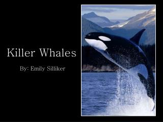 Killer Whales By: Emily  Silliker