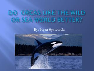 Do  Orcas Like The Wild Or Sea world Better?