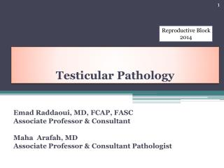 Testicular Pathology