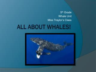 All About Whales!
