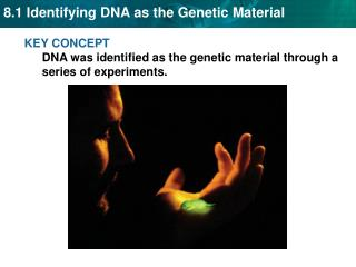 KEY CONCEPT DNA was identified as the genetic material through a series of experiments.
