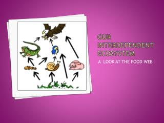 Our Interdependent Ecosystem
