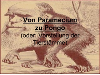 Von Paramecium  zu Pongo oder: Vorstellung der Tierst mme