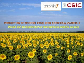 PRODUCTION OF BIODIESEL FROM HIGH ACIDIC RAW MATERIALS