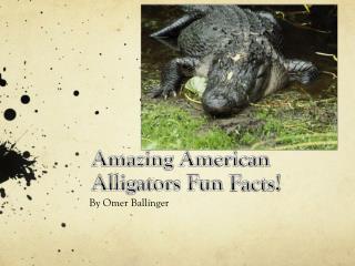 Amazing American Alligators Fun F acts!